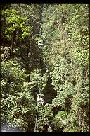 Aerial tram through the tropical rain forest canopy, Costa Rica